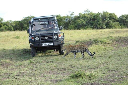 Masai Mara, Kenya, Africa, Safari, Wild, Savanna