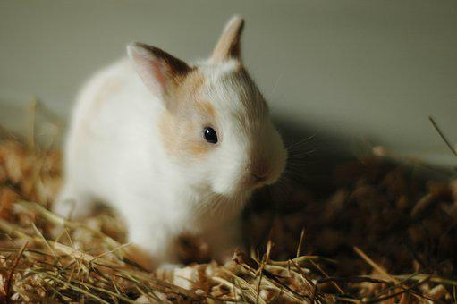 Rabbit, Small, Bunny, Cute, Animal, Fur, Pet, Little