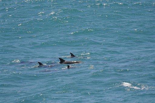 Dolphins, Sea, Mammal, Pinball, Ocean