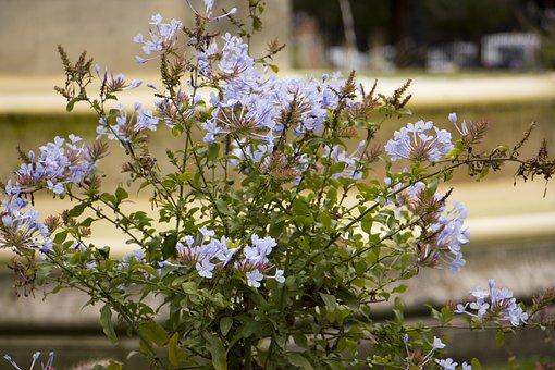 Flower, Garden, Pot, Plant, Potted, White, Background