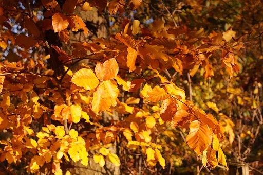 Autumn, Tree, Bush, Leaves, Aesthetic, Golden Autumn