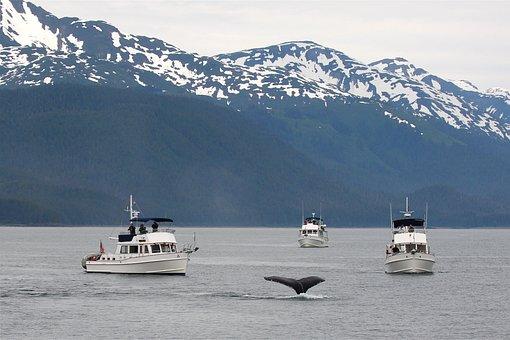 Alaska, Whale, Tail, Ocean, Sea, Wildlife, Humpback