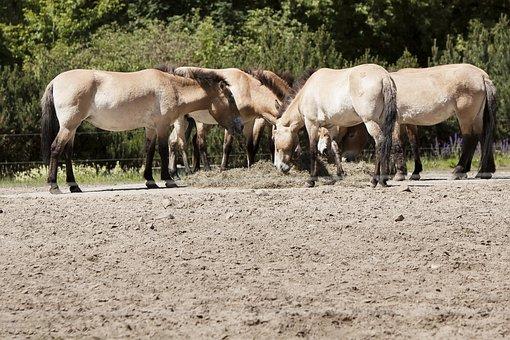 Berlin, Animal Park Berlin, Horses