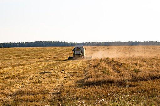 Cleaning, Harvest, Rural, Farm, Technique, Combine