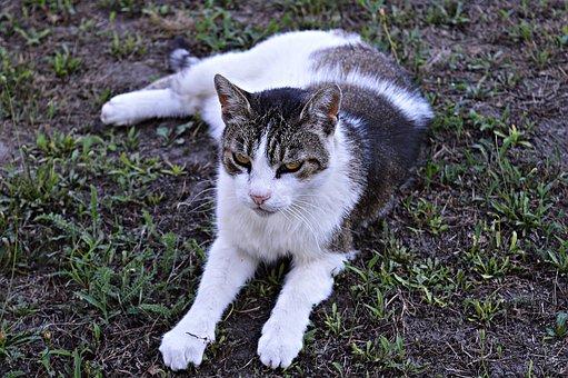 Cat, Tabby, Domestic Cat, Kitten, Tabby Kitten, Pets