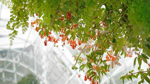 Climbing Plants, Flower, Vines