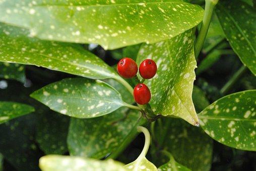 Berry, Leaves, Summer, Fruit, Shrub, Nature, Plant