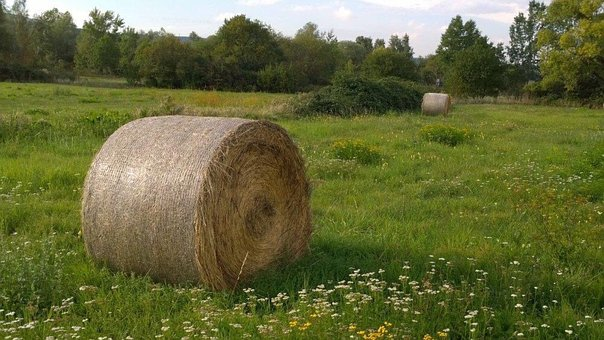 Meadow, Straw Bales, Straw, Hay Bales, Round Bales