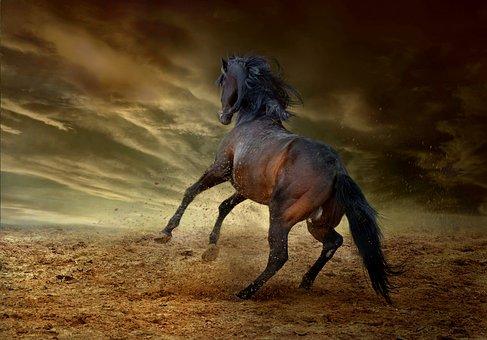 Horse, Equine, Run, Bucking, Freedom, Wild, Speed