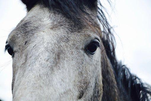Horse, Portrait, Head, Chamfer, Mane, Eyes, Animal