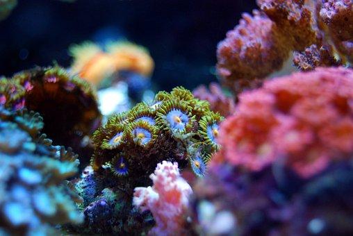 Coral, Reef, Sea, Water, Underwater, Marine, Tropical