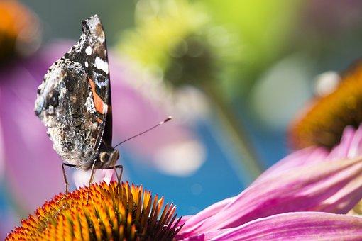 Nature, Papillion, Macro