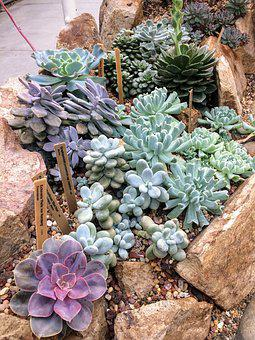 Succulent, Succulents, Plant, Garden, Botanical, Green