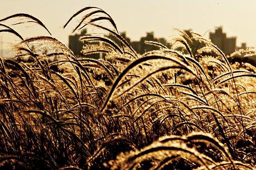 Taehwa, Reed, Sunset