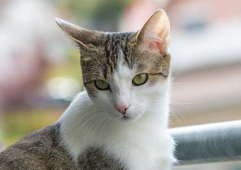 Cat, Animal, Domestic Cat, Mieze, Wildlife Photography