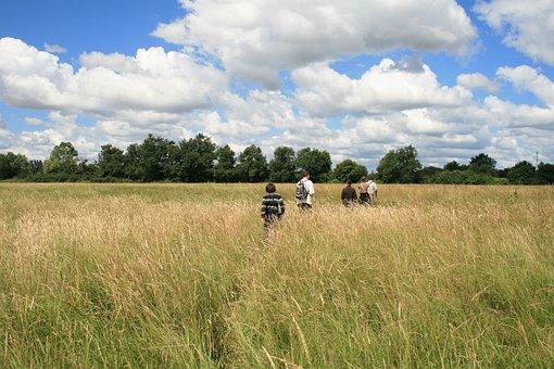 Field, Clouds, Tall Grass, Market, Ride, Nature, Sky