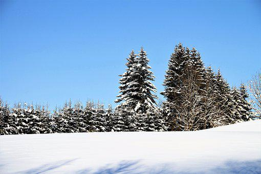 Winter, Trees, Snow, Landscape, Wintry, Cold, Frost