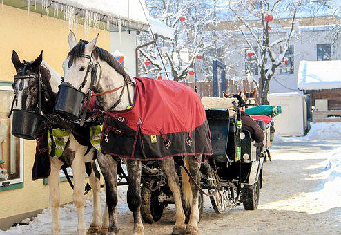 Winter, Horses, Snow, Animal, Nature, Cold, Frost