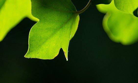 Leaf, Green, Background, Ranke, Entwine, Plant, Leaves
