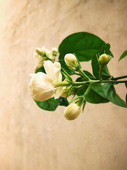 Flower, Beautiful Flower, Nature, Leaves
