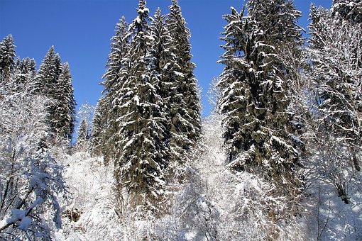 Winter, Snow, Cold, Trees, Nature, Landscape, Snowfall