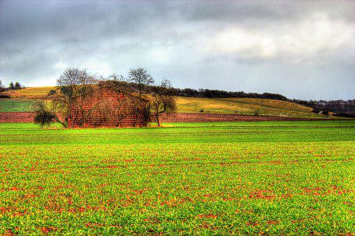 Meadow, Barn, Old, Nature, Hut, Field, Field Barn, Tree