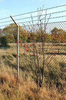 Fence, Rocket Base, Barbed Wire, Backed Up, Meadow