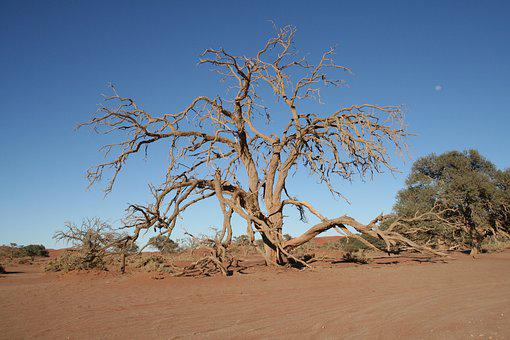 Tree, Namibia, Desert, Sandy, Africa, Landscape, Nature