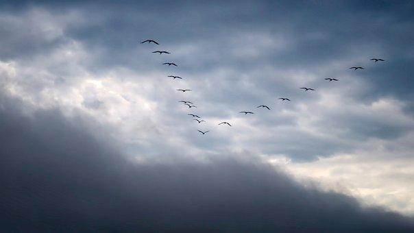 Migratory Birds, Sky, Migratory Bird, Bird