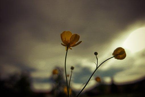 Flowers, Summer, Backlighting, Spring, Blossom, Bloom
