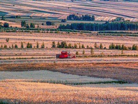 Village, Harvest, Corn, Straw, Field, Poland Village