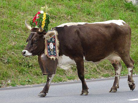 Cow, Switzerland, Alp Output, Bell, Decorated, Cows