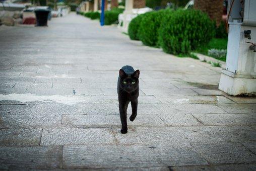 Cat, Croatia, Black, Animal, Futrzak, Nature, Sight