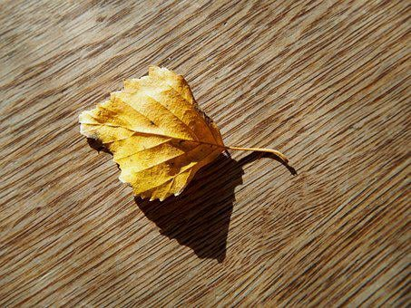 Leaf, Autumn, Wood, Background, Fall Foliage