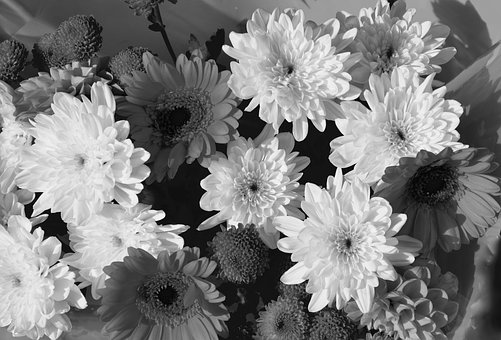 Flowers, Floral Composition, Photo Black White, Flower