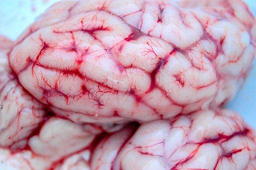 Brain, Neurology, Spirit, Anatomy, Medicine, Psychology