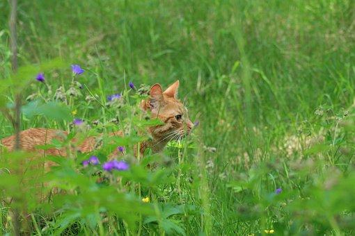 Summer, Cat, Nature, Animals, Fur, Pets, Flowers