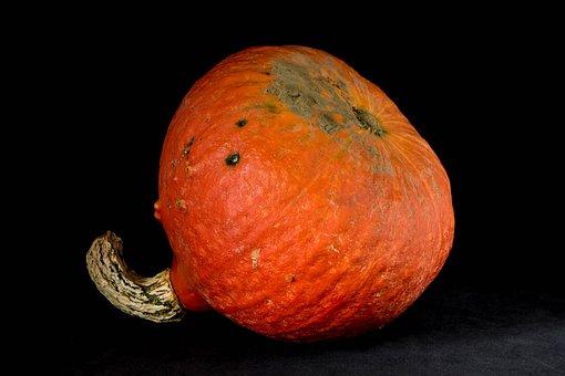 Squash, Orange, Vegetables, Produce, Fall, Power, Food