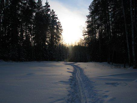 Winter, Forest, Trails, Sky, Winter Forest, Snow, Pine