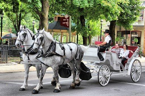 Horse, Carriage, Transportation, Animal, Travel
