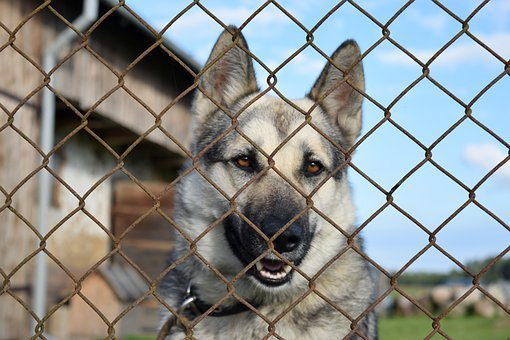Dog, Chained, Kennel, German, Shepherd, Fence