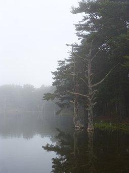 Lake, Fog, Stump, Dead Tree, Mystery, Melancholy, Dream