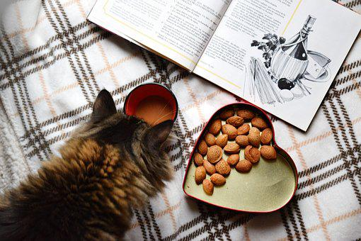 Food Flat Lay, Morning Coffee, Breakfast, Cat, Kitten
