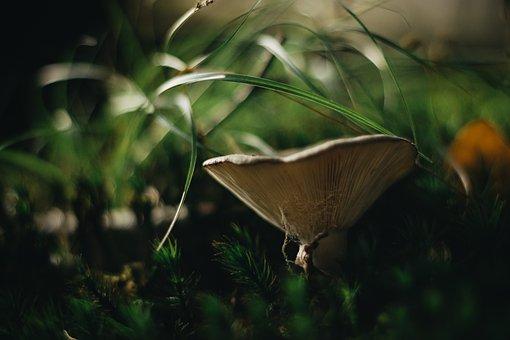 Mushroom, Mushrooms, Forest, Autumn, Nature, Moss