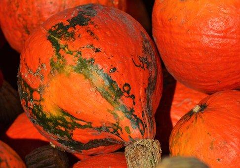 Pumpkin, Fruit, Orange, Autumn, Cucurbita Maxima