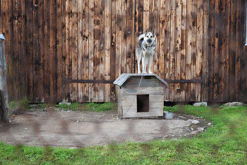 Dog, Chained, Kennel, Fence, Wire Fence, German