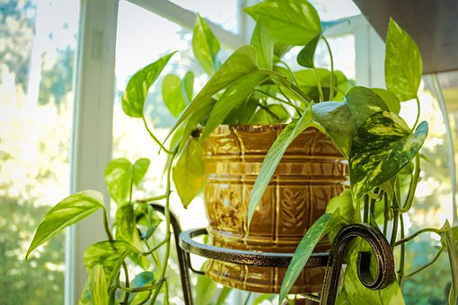 Plant, Home, Pet, Indoor Plant, House Plant, In A Pot