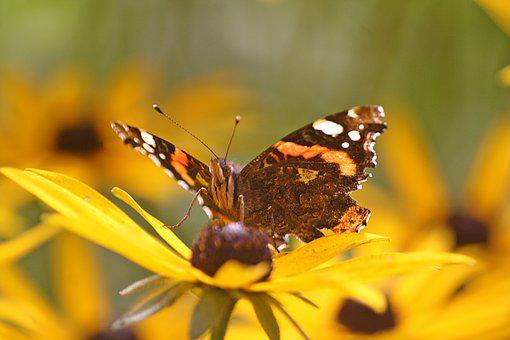 Animals, Walk In The Park, Insect, Butterfly