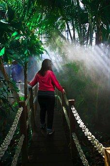 Jungle, Trees, Plants, Girl, Bridge, Light, Pink