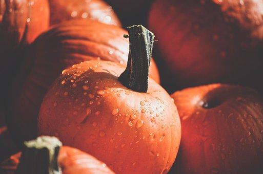 Pumpkins, Mini Pumpkins, Fall, Nature, Halloween